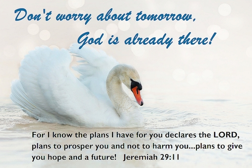Dont Worry about Tomorrow Bible Postcard - Swan